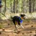 Image 11 - Laisse ceinture extensible Roamer pour chien Ruffwear