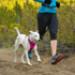 Image 12 - Laisse ceinture extensible Roamer pour chien Ruffwear