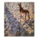 Image 2 - Laisse pour cani-randonnée Kn'1 Style