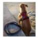 Image 3 - Laisse pour cani-randonnée Kn'1 Style