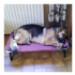 Image 2 - Lit pour chien Dream Bed