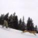 Image 5 - Longe Pullboard pour Cani-Board Kn1 avec chien