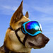 Image 1 - Lunette masque oculaire thérapeutique pour chien Rex-Specs K9