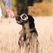 Image 6 - Lunette masque oculaire thérapeutique pour chien Rex-Specs K9