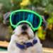 Image 11 - Lunette masque oculaire thérapeutique pour chien Rex-Specs K9