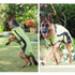 Image 9 - Manteau imperméable Kn'1® Active Way pour chien
