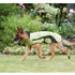 Image 4 - Manteau imperméable Kn'1® Active Way pour chien