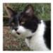 Image 7 - Médaille identité pour chien et chat