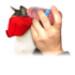 Image 6 - Muselière de contention Mus-cat™ pour chat