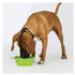 Image 5 - Muselière Muzzle-Flex pour chien