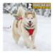 Image 6 - Harnais sport canin Omnijore pour canitrail / canirando Ruffwear