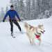 Image 7 - Harnais sport canin Omnijore pour canitrail / canirando Ruffwear