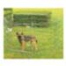 Image 2 - Enclos pour chien Dog park Savic