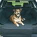 Image 1 - Protection de coffre automobile Bachousse™ pour chien