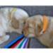 Image 3 - Pupcolors collier d'identification scratch pour chiot et chaton