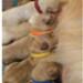 Image 4 - Pupcolors collier d'identification scratch pour chiot et chaton