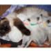 Image 5 - Pupcolors collier d'identification scratch pour chiot et chaton