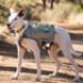 Image 3 - Sac à dos sport Singletrak pour chien