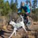 Image 4 - Sac à dos sport Singletrak pour chien