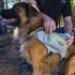 Image 5 - Sac à dos sport Singletrak pour chien