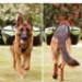 Image 11 - Sac de bât Pro Kn'1® Active Trail pour chien