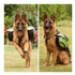Image 4 - Sac de bât Pro Kn'1® Active Trail pour chien