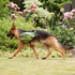 Image 12 - Sac de bât Pro Kn'1® Active Trail pour chien