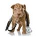 Image 2 - Stéthoscope Rappaport pour chien et chat