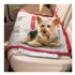 Image 1 - Tapis chauffant pour chien et chat Pet Thermal