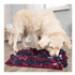 Image 1 - Tapis de fouille pour chien Activity Sniffing Trixie