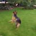 Image 4 - Tige télescopique Reizangel avec leurre à mordre pour chien