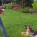 Image 5 - Tige télescopique Reizangel avec leurre à mordre pour chien