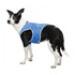 Image 1 - Veste rafraîchissante pour chien