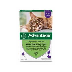 Advantage 80 Anti-puces pour chats > 4 kg Boîte 6 Pipettes