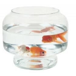 Aquarium Boule Neptune Zolux 5 litres