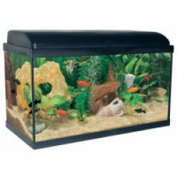 Aquarium Aquadream Aquatlantis