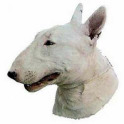 Autocollant race Bull Terrier 7 cm - Lot de 4