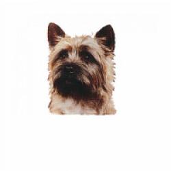 Autocollant race Caim Terrier 14 cm - Lot de 2