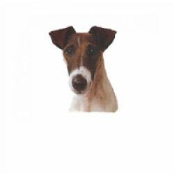 Autocollant race Fox Terrier Poil Lisse 7 cm - Lot de 4