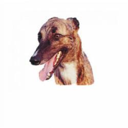 Autocollant race Greyhound 7 cm - Lot de 4