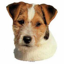 Autocollant race Jack Russel Terrier