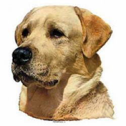 Autocollant race Labrador 7 cm - Lot de 4