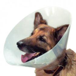 Collerette de protection Carcan pour chien et chat T1