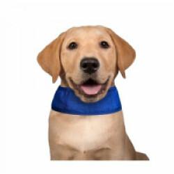 Collier rafraîchissant bleu pour chien Aqua Coolkeeper 22/29 x 2,5 cm