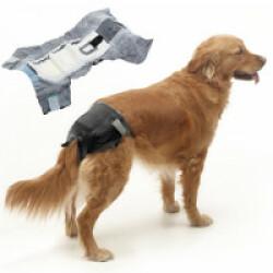 Couche culotte pour chien Comfort Nappy jetable pour incontinence