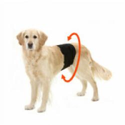Culotte d'incontinence et fuite urinaire pour chien mâle - Taille XS