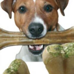 Denta Snack soin des dents pour chien (12 cm) - Lot de 10