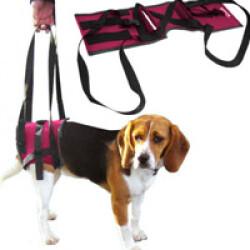 Handy canis baudrier portage postérieur portage chien et chat handicapés T1 XS