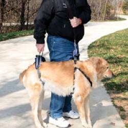 Harnais AidDog™ pour aide à la mobilité du chien âgé et handicapé T1 Medium Noir/Marron chien de 16 à 35 kg