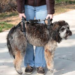 Harnais AidDog™ pour aide à la mobilité du chien âgé et handicapé T2 Large Noir/Bleu chien de 35 à 59 kg